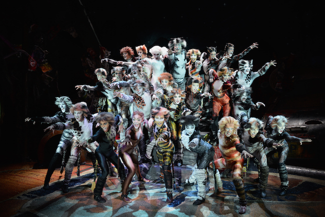 CATS The Musical opens in Sydney in October 2015
